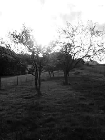 arbres_b_w