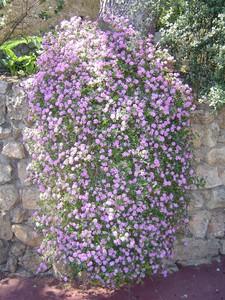 cascade_fleurs_parc_monaco
