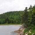 Foret et ruisseau