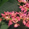 Orchidées du monde