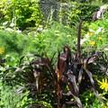 fleurs, légumes et graminées