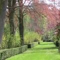 allée du parc de Versailles