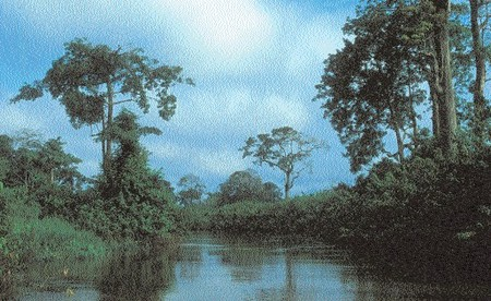 gabon_wetlands_10_38_real