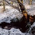 la source après la fonte de la neige