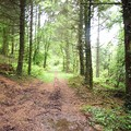 loin des clichés bretons. forêt