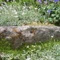 bloc de granit noyé dans les fleurs