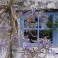 printemps,la suite!