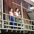 Buffalo dans les rizieres , Muang Ngoi
