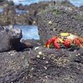 meme les crabes n ont pas peur !!