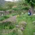 le p'ti jardin des fleurs ...