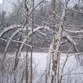 Le marais sous la neige