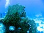 corail3_safagamai05
