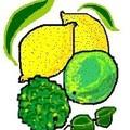 citrons divers