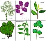 herbes19