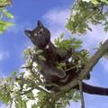 Les chats du jardin de Séverin