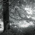 wen_tree_trio_3