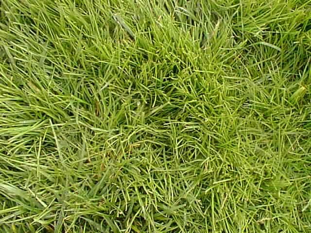 Main verte au jardin les conseils du g ant vert for Haute herbe pokemon