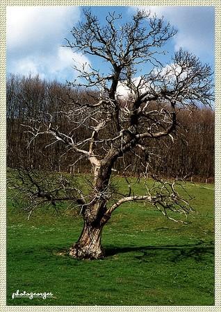 arbre_mort