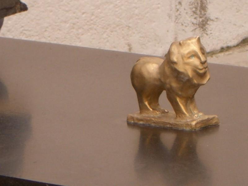 lions_toros_007