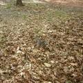 Ecureuils sur BATTERY PARK