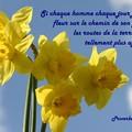 Pensée printemps