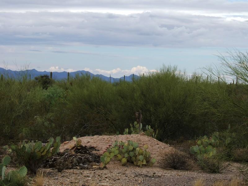 Arizona - Désert (vue de Old Tucson)