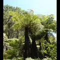 Vendredi 03/02 - NZ - Coromandel - Cathedral cove