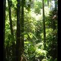 Vendredi 4/11 - Jungle amazonienne