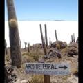 Mercredi 19/10 - Bolivie - Salar de Uyuni - Ile des cactus