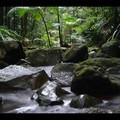 Jeudi 02/03 - New south Walles - Nightcap National park