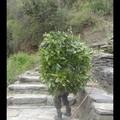 Dimanche 02/04 au 12/04 - Trek Annapurna - Arbre vivant