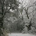 Là on se dirait vraiment débarqué à Narnia !