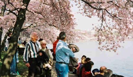 55_dc_peak_blossom_3