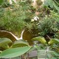 Biotope tropical reconstitué sous serre