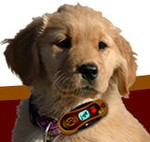 petscelldog