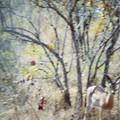 Impala façon impressioniste