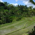 Never ending terraces rice fields