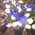 flora_page_11