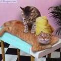 centre de massage pour chat