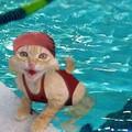 chat aquatique