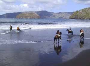 chevaux_sur_la_plage_d_Atuona1