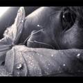 papilllllonn