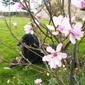 Noé à travers du magnolia