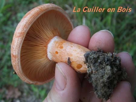 champignons_26