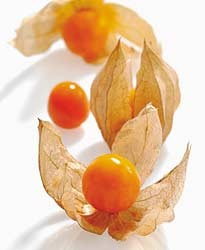 Confiture d 39 amour en cage physalis lady marmelade - Fruit cage d amour ...