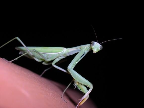 Les insectes, ces chimistes, architectes et pharmaciens