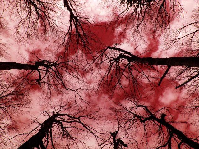 arbres_apocalypse