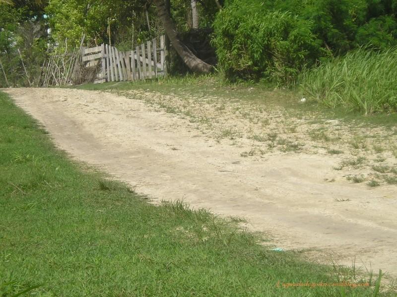Chemin amenant au site de Beautiran