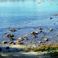 Au Cap d'Antibes