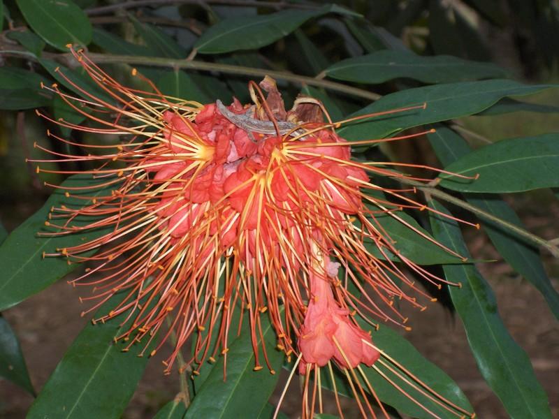 Jardin botanique de Cienfuegos